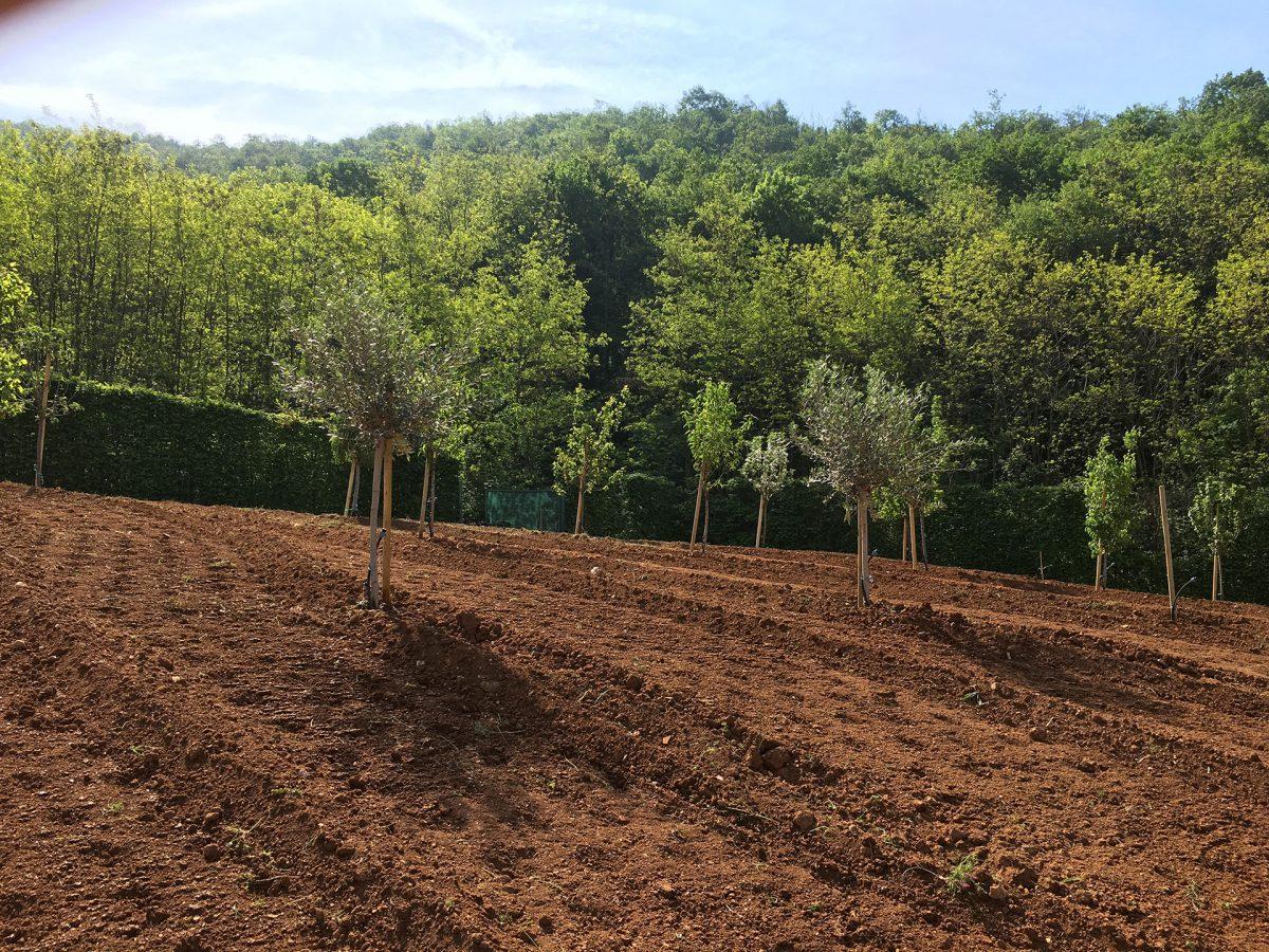 Realizzazione verde e giardini